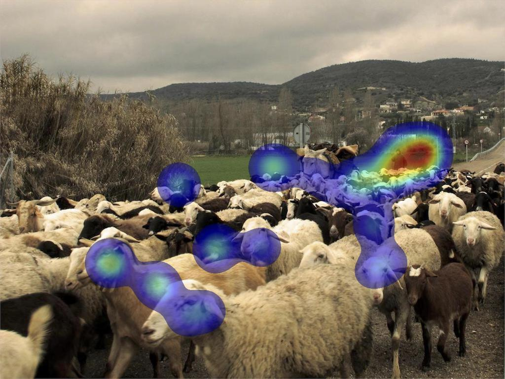 Picture of sheep overlaid with eye-tracking data.